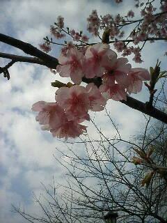 春、見ぃつけた(-^<br />  〇^-)